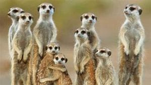 Jem Ayres Sex Coaching Circle Meerkat group